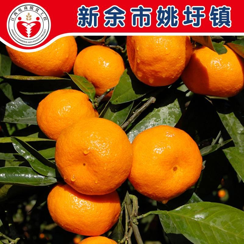 【爱心扶贫 9.9元4斤】新余蜜橘 桔子 新鲜现摘包邮2天内发货(偏远地区不发货)